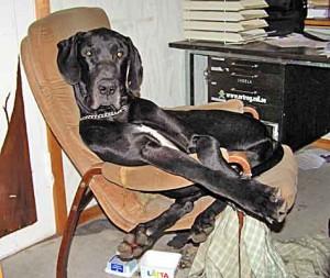 Knäppa Dusis får nästan plats i stolen